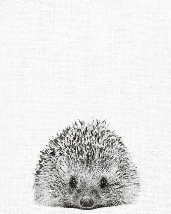 Print 176 : Hedgehog Print, Hedgehog Photo, Hedgehog Wall Art, animal print, Nursery Decor, Black and White Animal Photography, scandinavian print  Type: Digital art print. This is a digital product with instant download.  Orientation: Vertical  Print sizes: 1. 4:5 ratio for printing 4x5inc / 8x10inc / 16x20inc / 40x50cm / 60x75cm  2. 2:3 ratio for printing 8x12inc / 20x30inc / 10x15cm / 20x30cm / 30x45cm / 40x60cm / 50x75cm  3. International A3/A4/A5 ratio for printing    ABOUT YOUR…