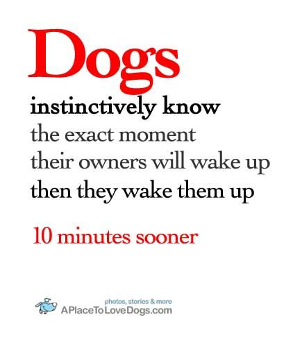 Dogs instinctively know :)