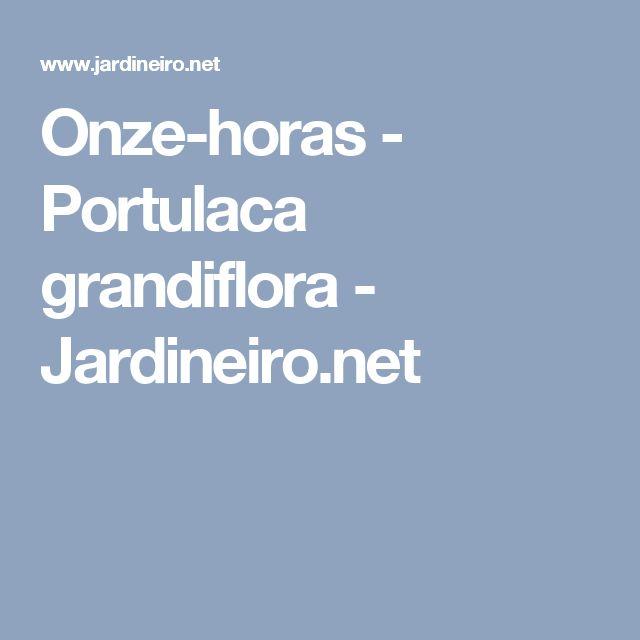 Onze-horas - Portulaca grandiflora - Jardineiro.net