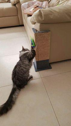 Para que se rasque y se rasque mucho tu gatito   #gatito #mucho #para #rasque #s…