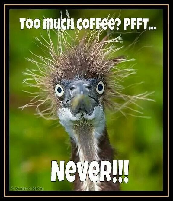 Too much Coffee? Pfft. . . Never! ! | Coffee | Animals ...