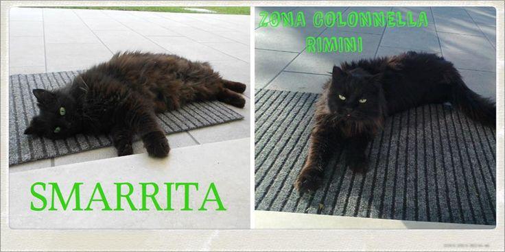 SMARRITA - RIMINI (zona Colonnella)  Smarrita gatta nera a pelo lungo, circa 3 anni, carattere socievole. E' stata vista l'ultima volta in via Andrea Costa la sera di venerdì 29 gennaio 2016 intorno alle 23. Per contatti: 3355816535 o 3391199082 (anche sms).