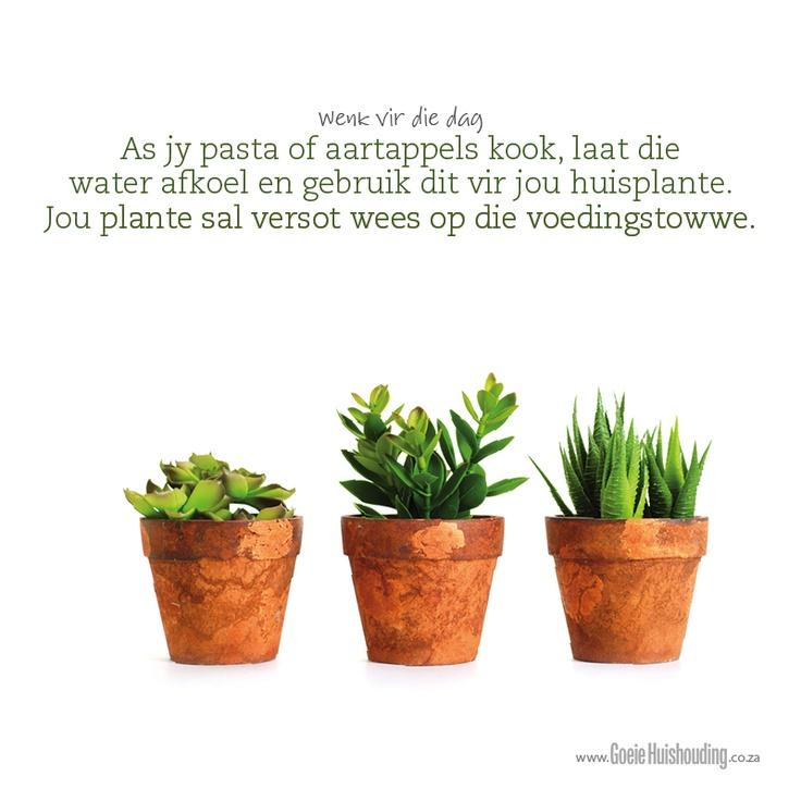 As pasta of aartappels kook, laat die water  afkoel en gebruik dit vir jou huisplante. Jou plante sal versot wees op die voedingstowwe. www.goeiehuishouding.co.za