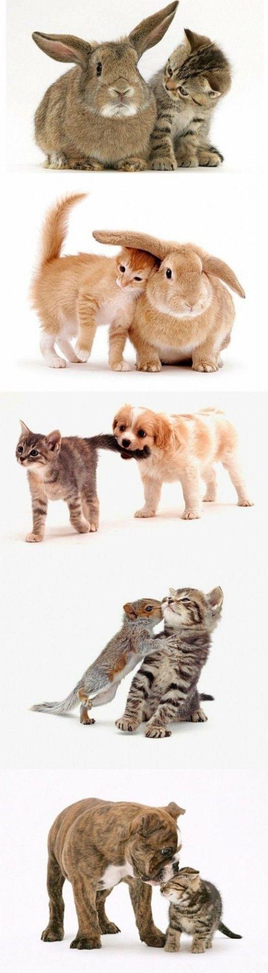 Baby animal love!Cat, Animal Baby, Pets, Cute Animals, Animal Friends, Kittens, Baby Animals, Furries Friends, Kitty