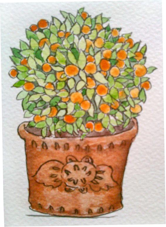 árbol de naranjas / mi favorito