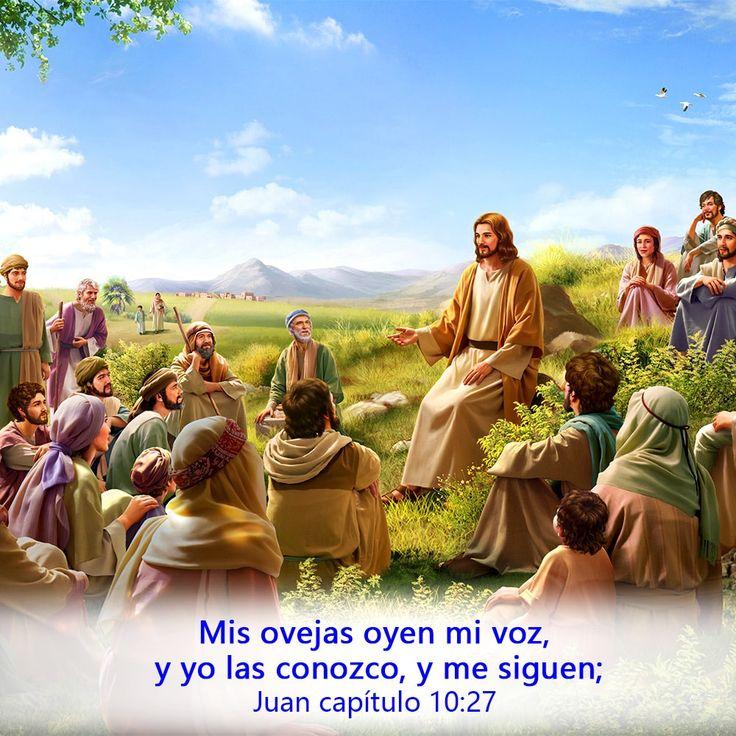 Mis ovejas oyen mi voz, y yo las conozco, y me siguen; (Juan 10:27) #Estudiarlab…