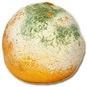 What Happens if You Eat Mold? - Mold on Food Facts