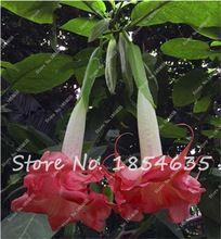100 Stks Regenboog Datura Zaden, Planten Datura, Bonsai Datura Bloem, Semenatsvety Perennial Tuin, Pot Plant voor huis Tuin Decor(China (Mainland))