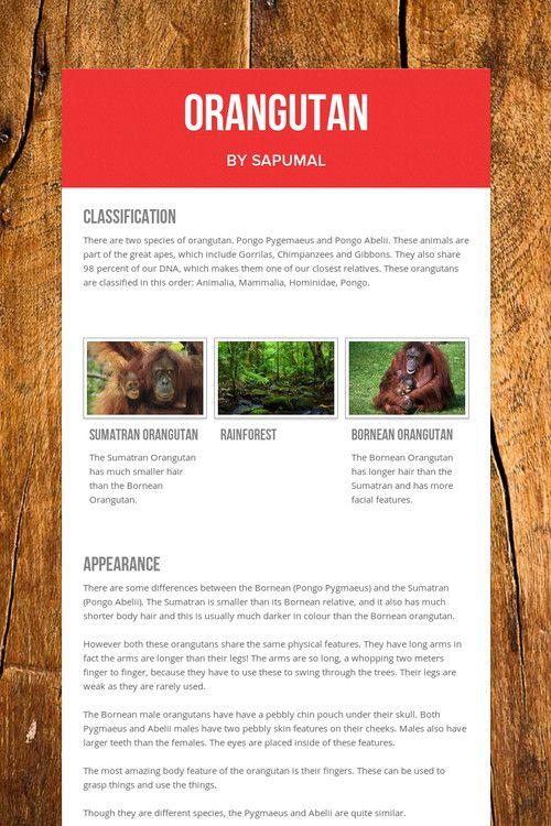 Orangutan by Sapumal