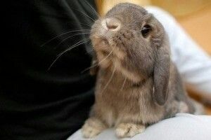 look at that little bunny face
