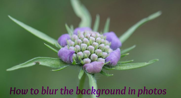 How to take a photo with a blurred background