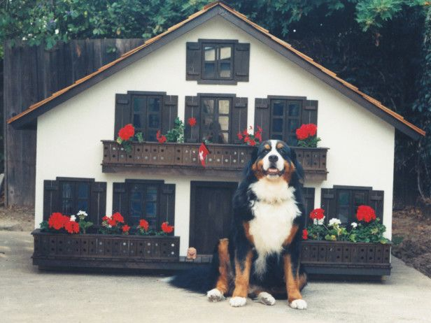 stylist and luxury how to design a dog house. 7 Designer Dog Houses That Rival Most Human  119 best Homes Fit For A images on Pinterest cat