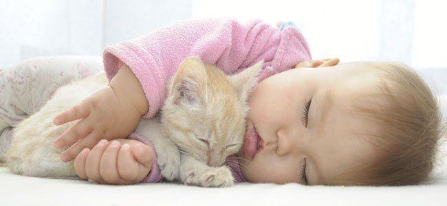 ¿Preocupado por cómo va a reaccionar tu gato con la llegada del bebé? Lee nuestros consejos