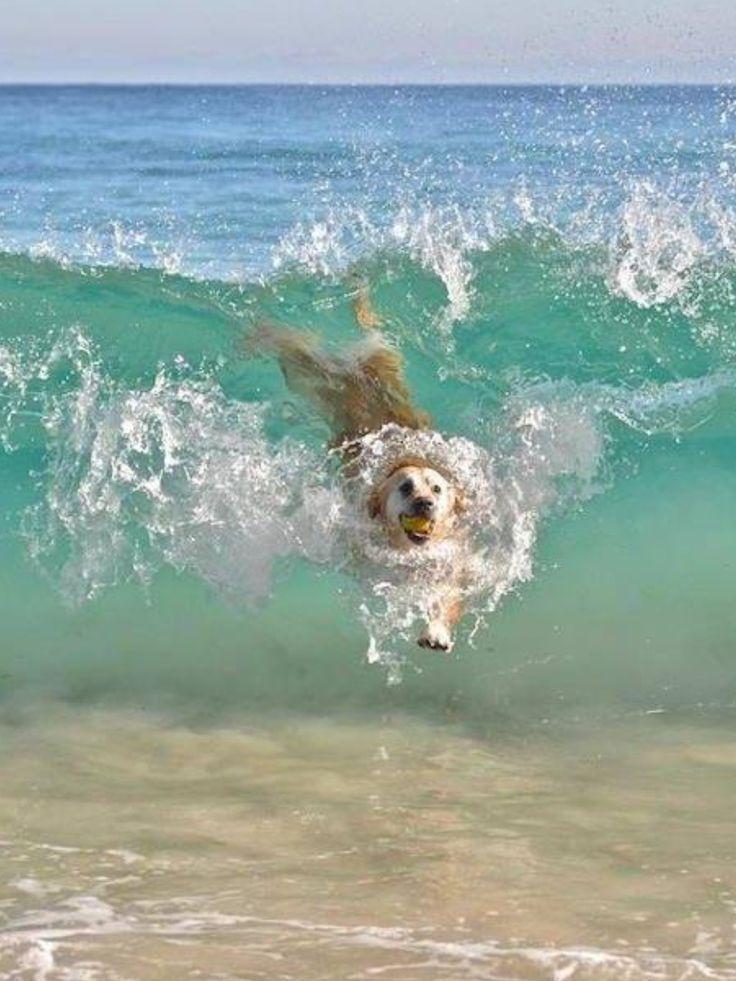 #DOG##ANIMALS##CUT# #FUNNY##SEA#
