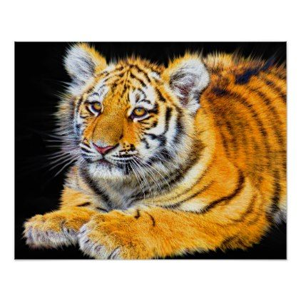 Tiger Poster - animal gift ideas animals and pets diy customize