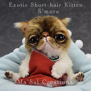 Ma'Sal original Special Dolly Exotic Short-Hair Kitten / Direct from the Artist #MaSalCreations #AllOccasion