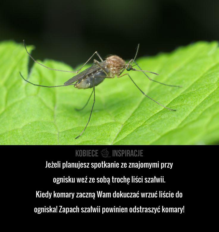 Jak pozbyć się komarów?