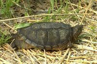 How to Make Homemade Turtle Traps (12 Steps)   eHow