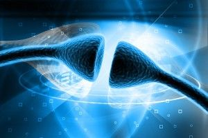 Electrical Synapses Are Critical for Chemical Synapse Function