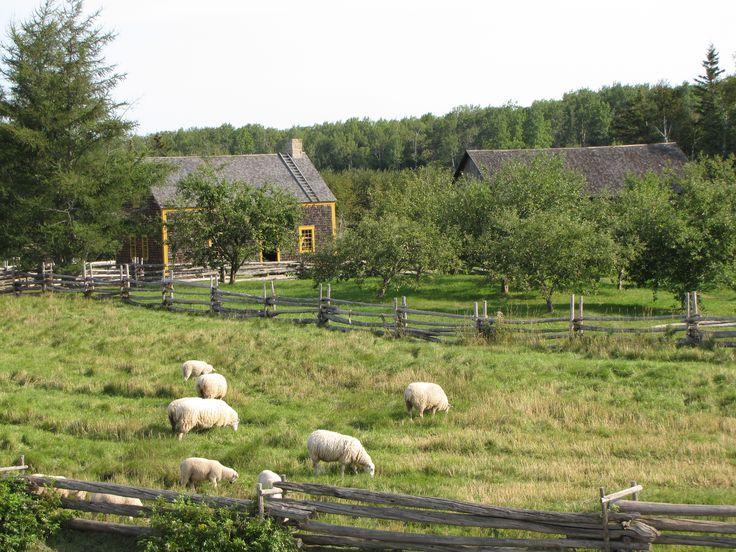Moutons devant la ferme Babineau.