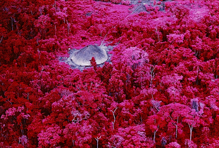 Claudia Andujar, Urihi-a, 2010  #forest #pink