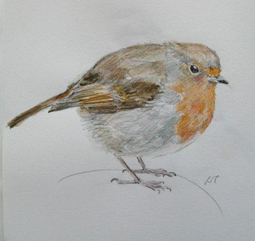 robin drawings 014