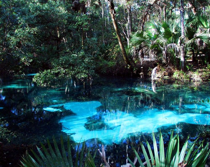 Juniper Springs This central Florida gem, located at Ocala National Forest, will make you feel like you're stepping into Ariel's secret grotto. Canoe or kayak the juniper run where the water is cool and clear and you can watch small springs bubbling up from the shallow, sandy bottoms as you paddle your way through shaded florida wilderness.