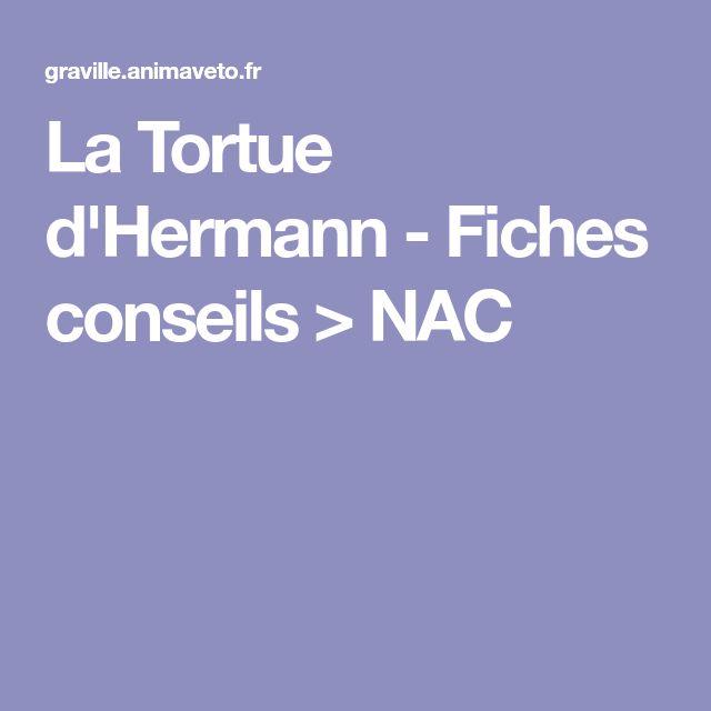 La Tortue d'Hermann - Fiches conseils > NAC