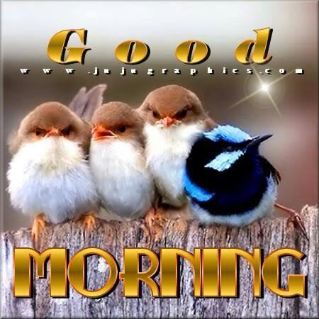#Goodmorning #Birds | #10 Exotic Birds, Fowl @LIFETEAMS ...