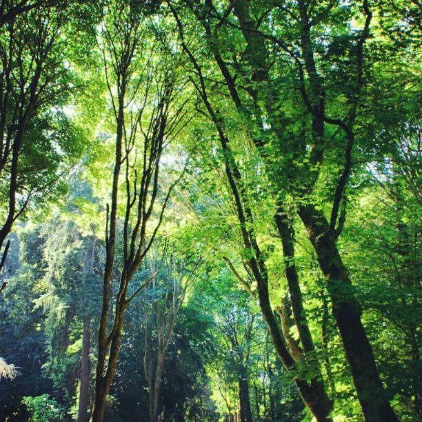 #nature #forest #trees #seattle #rscpics #igersoftheday #igerspescara #photooftheday  http://whosin.com/nature