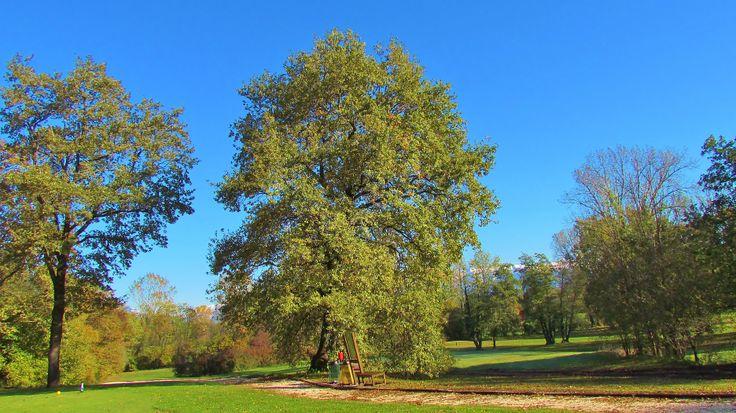 Trees Golf Club Udine - Italy