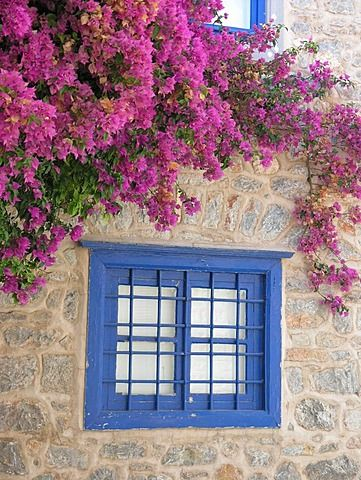Blue window in field stone wall with pink bougainvillea Hydra Saronic island Greece