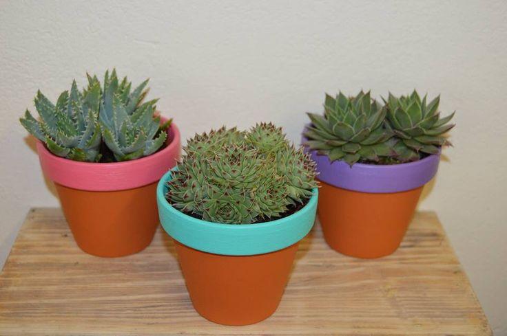 Terracotta Succulent