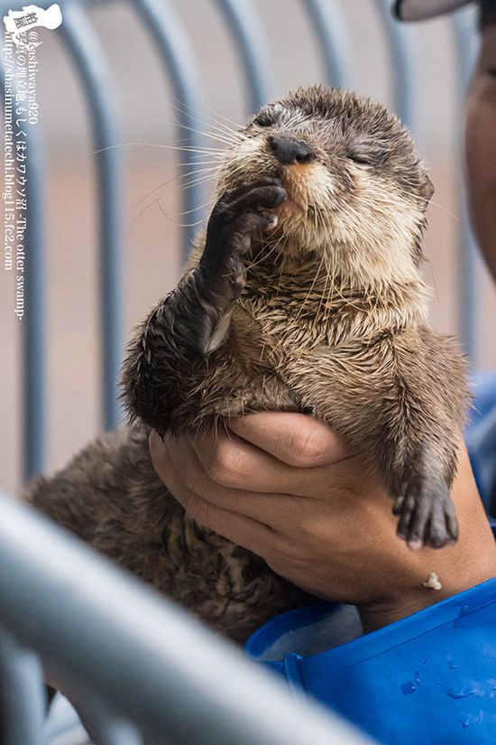 Shh! Don't interrupt genius otter when she's deep in genius thoughts! - July 14, 2016