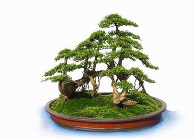中国盆景在世界 (1)起源于中国的盆景艺术