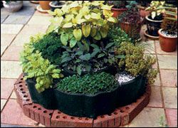 How To Plant Herb Seed?at The Home Depot -