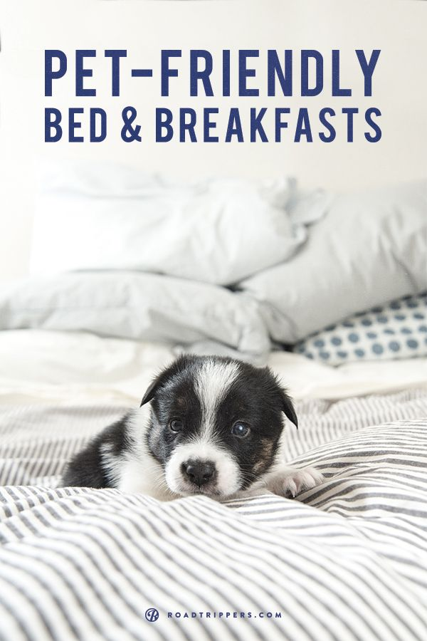 Take your dog with you to these pet friendly B&Bs.