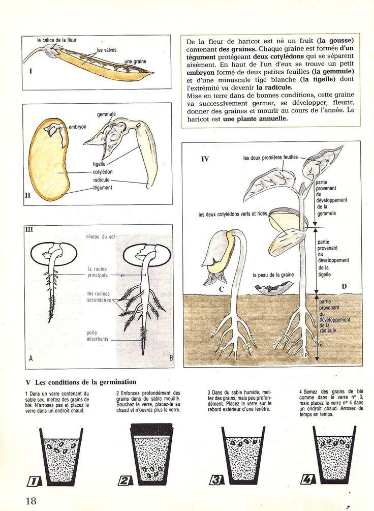 the 25+ best la germination ideas on pinterest   germination