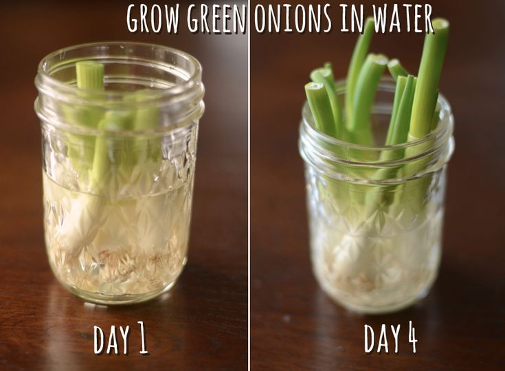 Grow your own green onions: Water, Garden Ideas, Time, Growing Green, In A Jar, Grow Green Onions, Food, Gardening