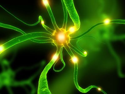 neuroscience3