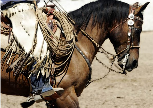 Vaquero Tack and Buckaroo Gear