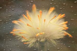 Misty Flower