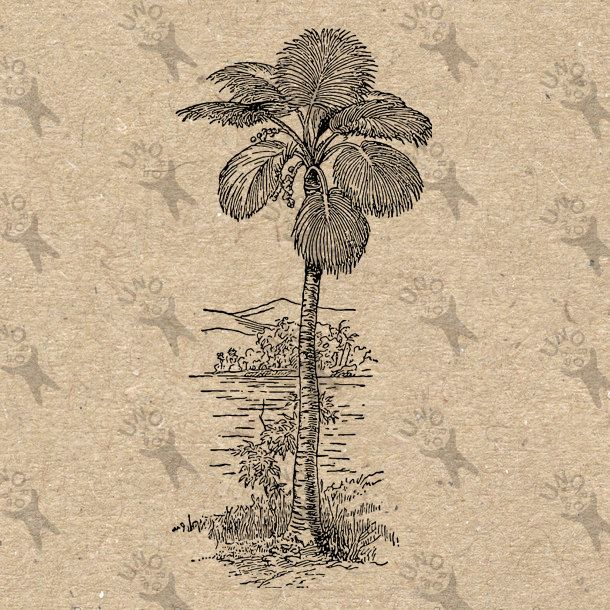 Vintage Palm Tree black and white image Instant Download Digital printable picture retro clipart graphic - transfer, burlap, iron on 300dpi by UnoPrint on Etsy #hq #png #bw #Ephemera #diy #old #book #illustration #gravure #inspiration #retro #antique #vintage #300dpi #craft #draw #drawing  #black #white #printable #crafts #transfer #decor #hand #digital #collage #scrapbooking #quality