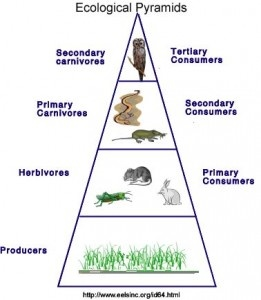 25+ best ideas about Ecological pyramid on Pinterest   5th grade ...