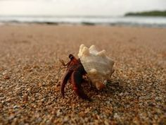 Making your hermit crab happy will keep it active and give you years of enjoyment.