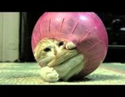 Sad French Kitty Wins 'Best Cat Video on the Internet'