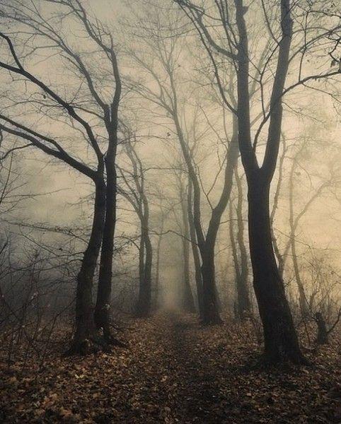 photographie nature mélancolique • nature forêt branche bois arbre automne hiver (forest wood trees fall winter)