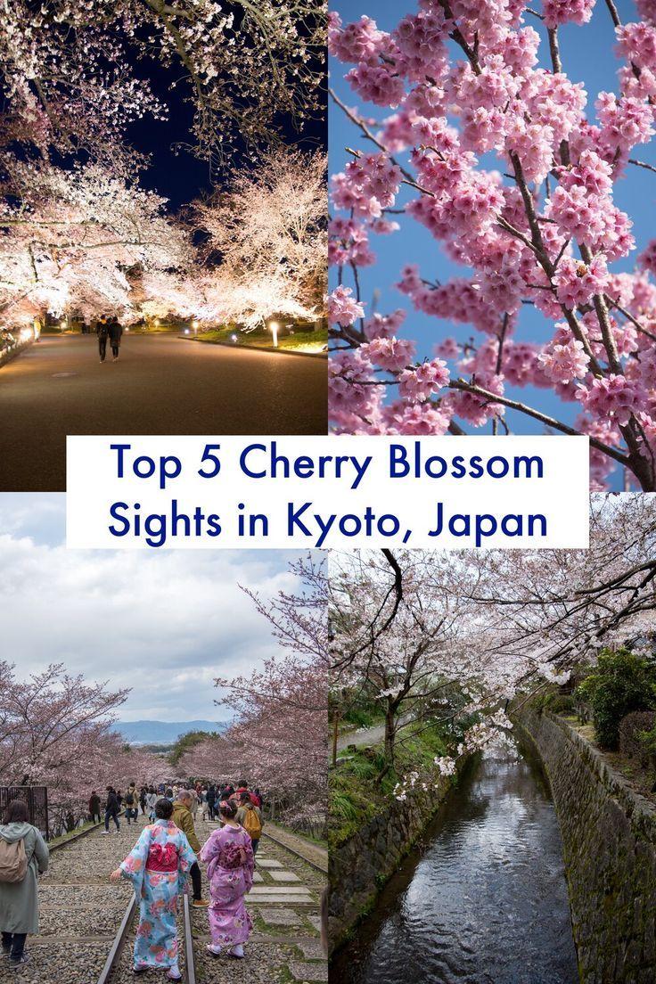 The 5 Must See Sakura Locations In Kyoto Japan A Happy Passport Spring Travel Destinations Japan Travel Travel Fun