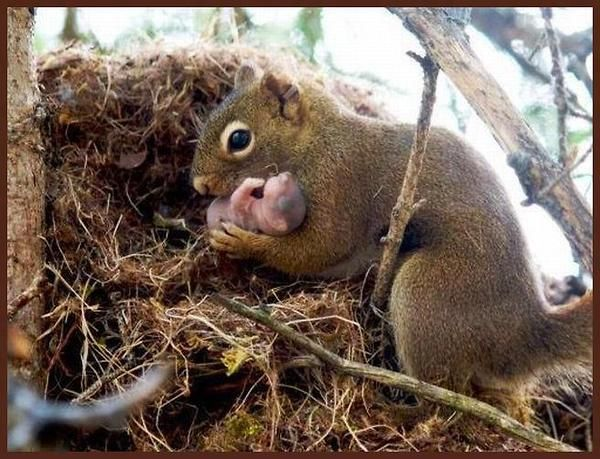 Squirrel and her baby. Awww. Right now they're taking all the acorns I wanted for fall decorating. Maybe they need them more than I do anyway.