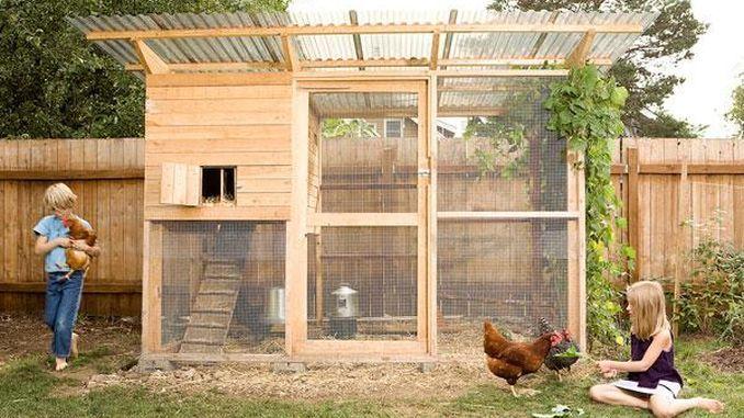 Cum se construiește un coteț de găini: 5 modele pentru spații mici